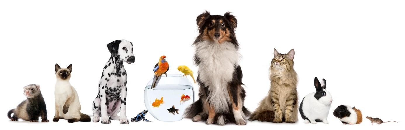 Haustiere Und Feng Shui