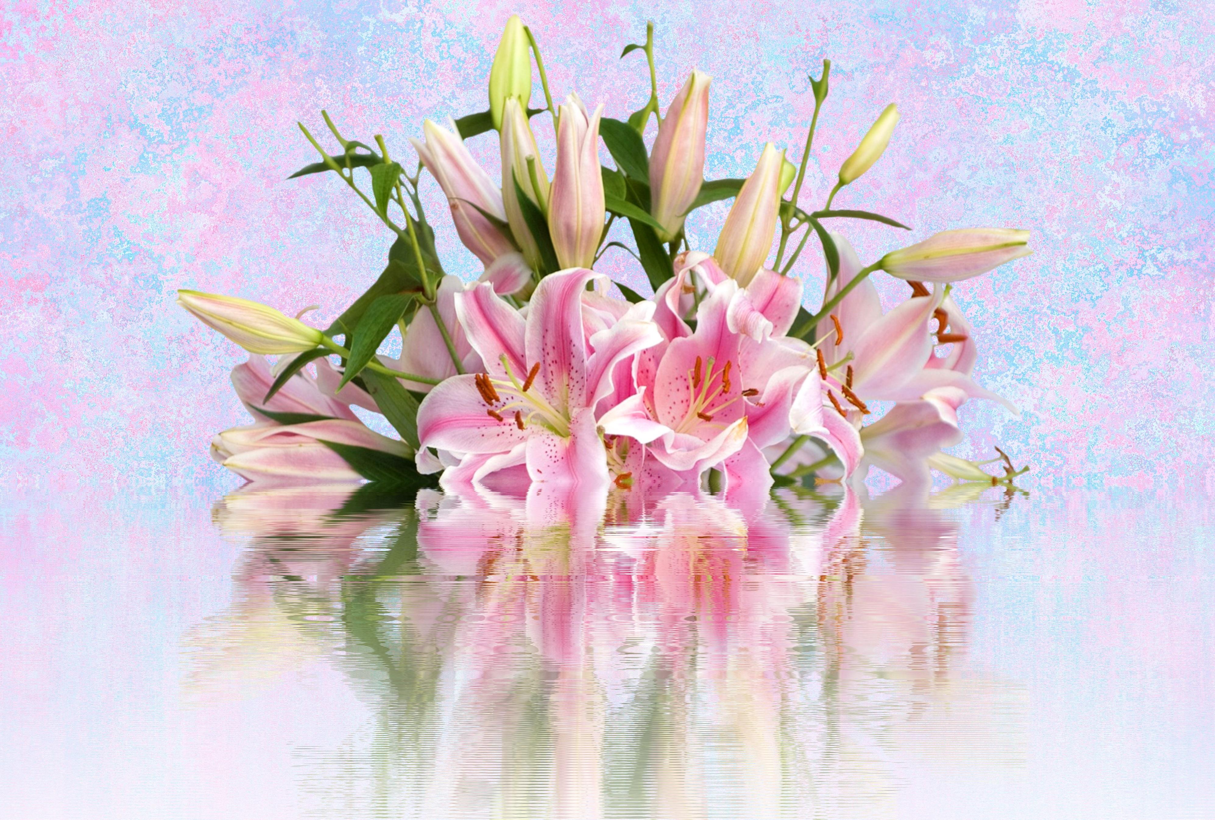 Welche Bedeutung Haben Lilien Im Feng Shui Living In Harmony