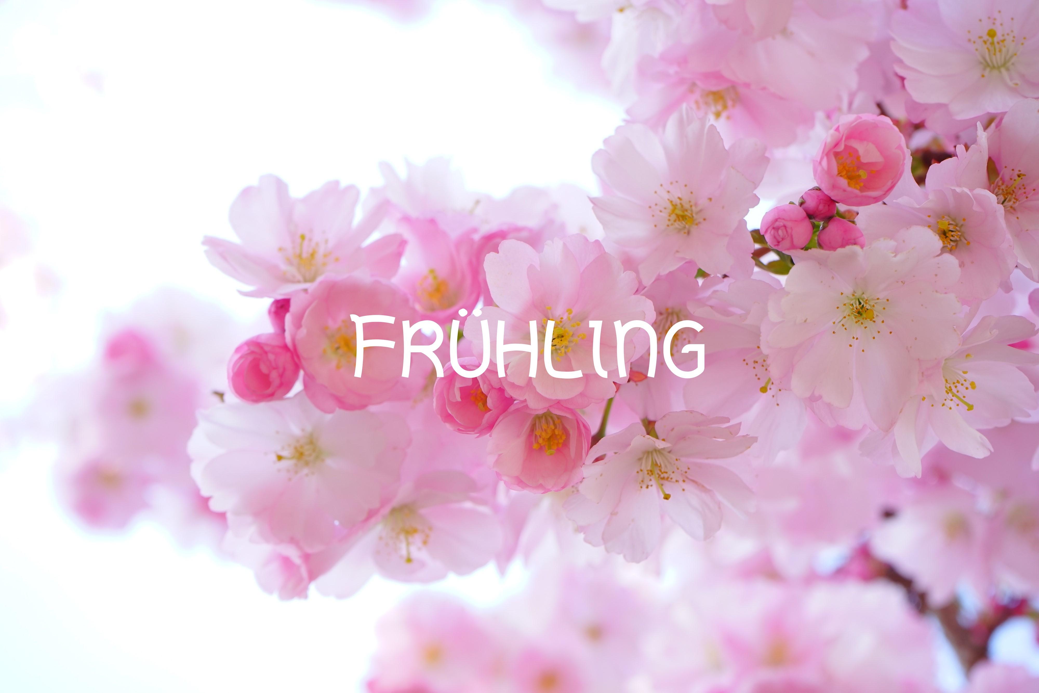 Frühling Aus Der Sicht Von Feng Shui