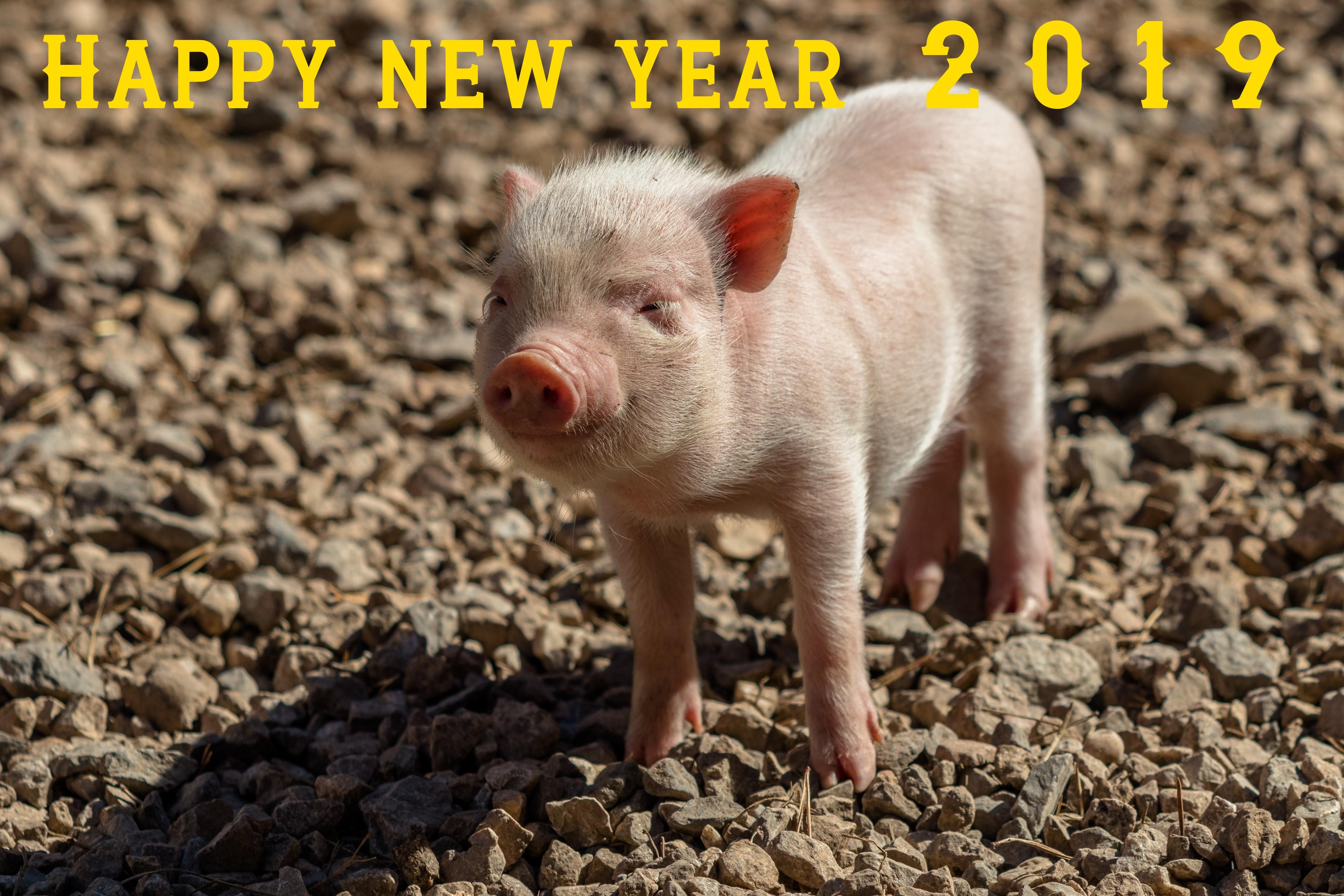 Chinesisches Neujahr – Erdschwein